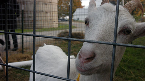 Animals at our Farm near Clifton Park and Saratoga Springs