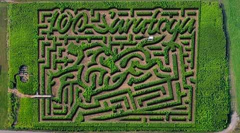 Amazing Maize Corn Maze