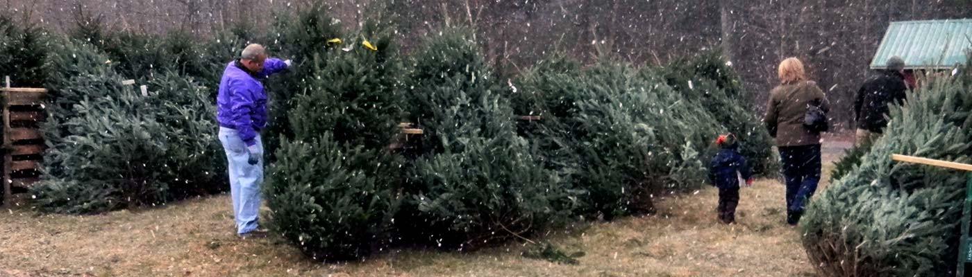 Christmas Tree Varieties