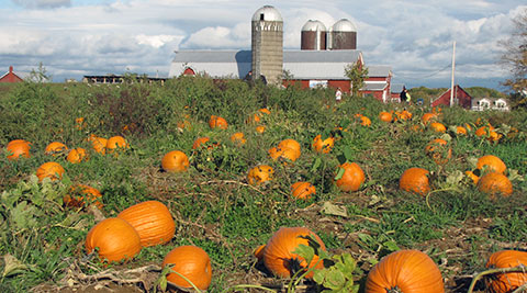 Saratoga Pumpkin Patch with Pick Your Own Pumpkins