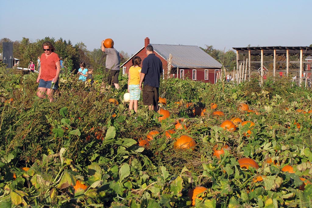 pumpkin-patch2