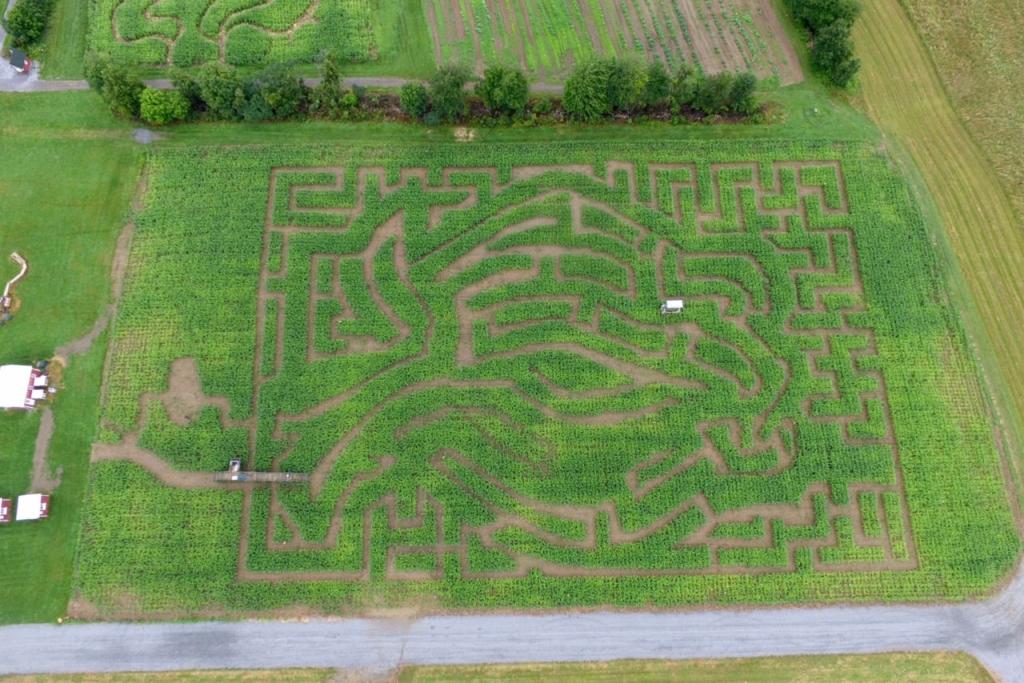 Amazing Maize Corn Maze in an apple shape