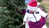 Ellms Farm - Cutting Your Own Christmas Trees!