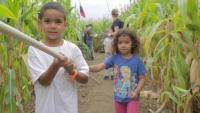 Corn Maze at Ellm's Farm