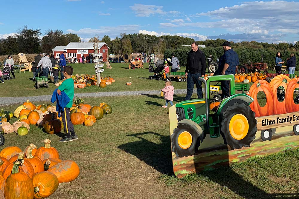 Pumpkins and families