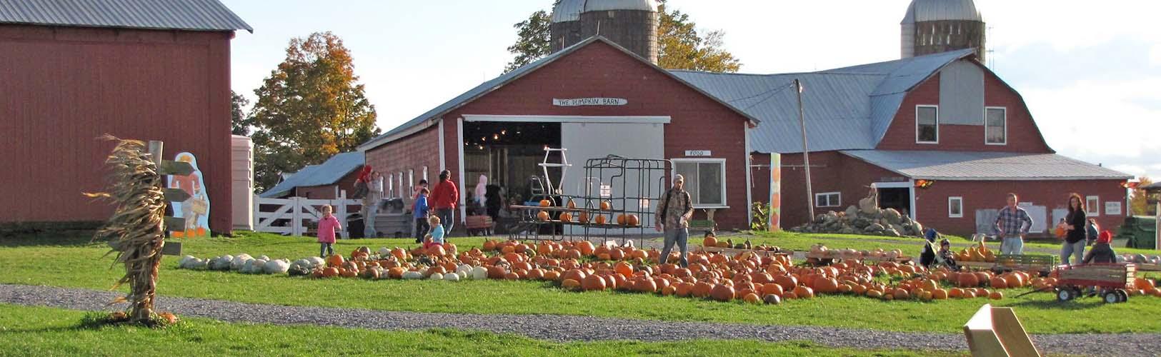 Pumpkin Patch at Ellms Family Farm