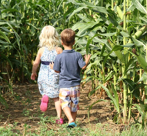 Small children in the corn maze at Ellms