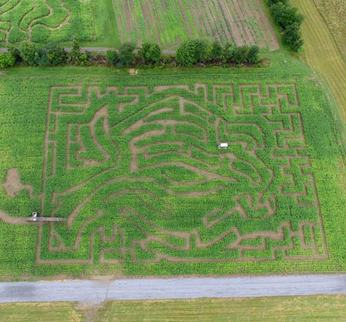 Aerial view of the Amazing Maize Corn Maze