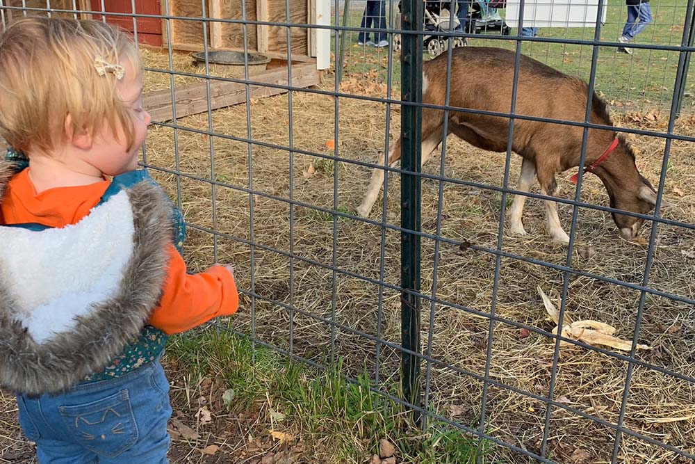 girl watches animals in petting area