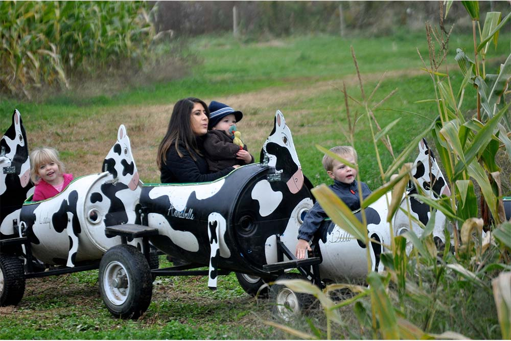 family in cow train