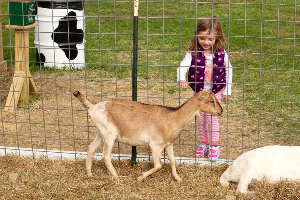 girl petting animal