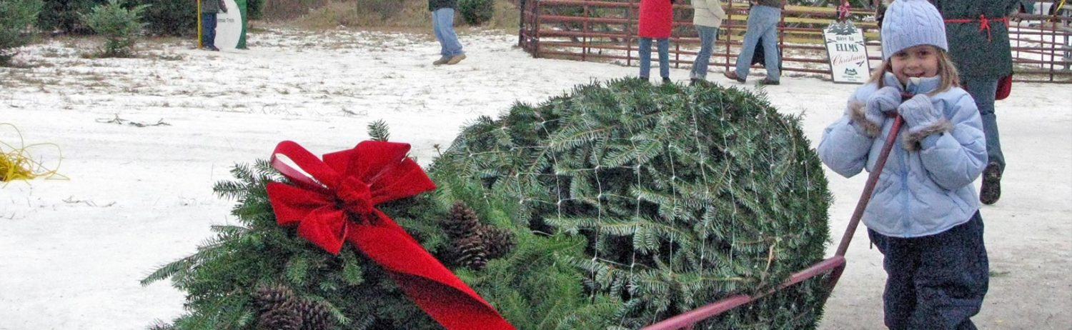 Child pulls tree cart with Christmas tree and wreath