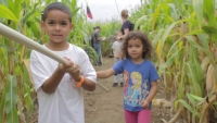 Corn Maze at Ellm's Farm
