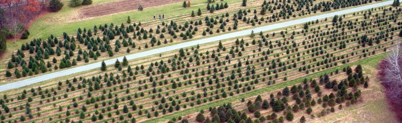 Ellms Christmas Tree Farm